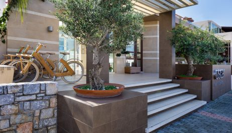 Olive trees next to the stairs leading to the entrance of Oscar Suites & Village in Chania.